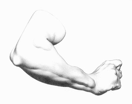 Pencil drawing of an arm
